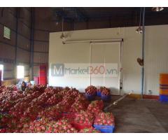 Bán kho lạnh trữ rau củ quả Tại Bình Thuận-Làm kho lạnh trữ Thanh Long