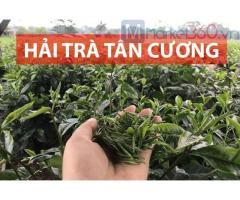 Trà Thái Nguyên giá rẻ thơm ngon từ Hải Trà Tân Cương