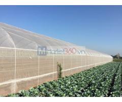 Lưới chống côn trùng, lưới chống côn trùng politiv, lưới thái lan trồng rau sạch