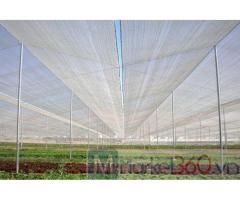 Báo giá lưới trồng rau sạch, mô hình nhà lưới politiv israel trồng rau hiện nay