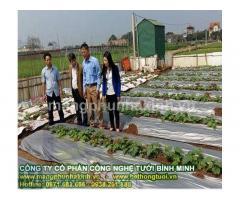 Màng phủ nông nghiệp, cách dùng màng phủ nông nghiệp, lợi ích màng phủ nông nghiệp, màng nilon dùng trong nông nghiệp