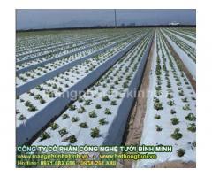 Màng phủ nông nghiệp, bạt phủ nông nghiệp, màng PE phủ luống, màng nilon phủ đất, màng phủ sinh học