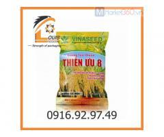 Bao bì đựng gạo - bao đựng lúa