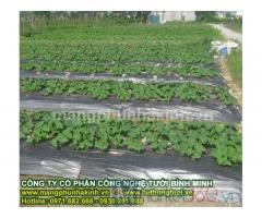 Màng phủ nông nghiệp,màng phủ nông nghiệp giá rẻ, màng phủ đất