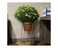 Kệ đôn trang trí chậu cây cảnh, đôn tròn kê chậu hoa trong nhà, kệ decor phòng khách, quán cafe màu vàng gold đẹp, bền