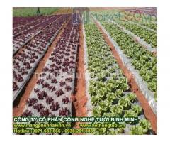 Màng phủ nông nghiệp cao cấp, màng phủ nông nghiệp loại 1, màng phủ nông nghiệp che cỏ