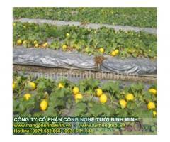 Cách sử dụng màng phủ nông nghiệp,cung cấp màng phủ nông nghiệp,màng phủ nông nghiệp loại tốt