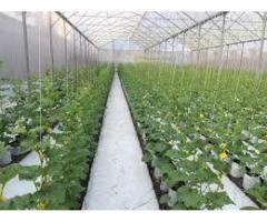 Mô hình nhà lưới israel politiv trồng cây công nghệ cao trong nông nghiệp hiện đại