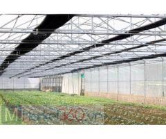 Lưới chắn côn trùng ở hà nội, lưới chắn côn trùng phải chăng, lươi chắn côn trùng nông nghiệp