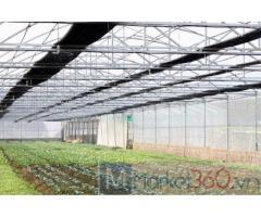 Nhà lưới nông nghiệp politiv israel, mô hình nhà lưới trồng rau, chi phí làm nhà lưới