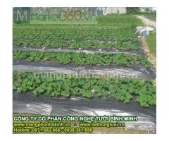 Hướng dẫn sử dụng màng phủ nông nghiệp, màng phủ nông nghiệp, cách dùng màng phủ nông nghiệp,