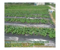 Hướng dẫn sử dụng màng phủ nông nghiệp đúng cách, màng phủ luống, màng phủ nông nghiệp giá rẻ
