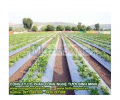 Công ty sản xuất màng phủ nông nghiệp,màng phủ luống,cách sử dụng màng phủ nông nghiệp