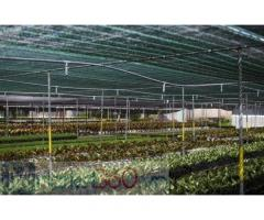 Nhà cung cấp lưới che nắng thai lan, bán lưới che nắng nhập khẩu thái lan tại hà nội
