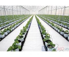 Vật tư nhà kính nhà lưới, màng phủ đất trong nhà màng, bạt trải nền hà nội