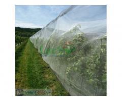 Lưới trùm táo ngăn chặn ruồi vàng hiệu quả